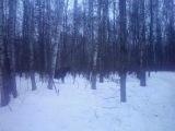 нагшли в лесу Лося... продолжение...